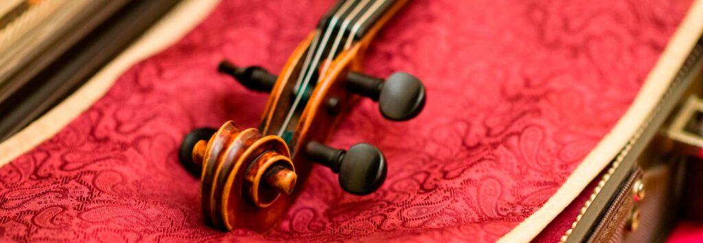 Geigenschnecke